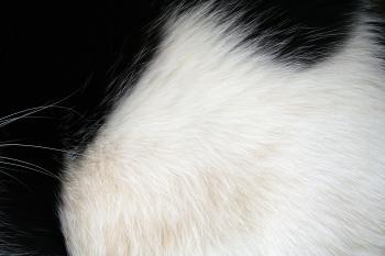 Black and white fur