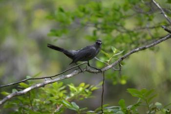 Black Bird On a Branch.