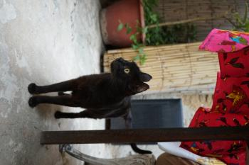 Black cat in Fes
