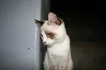 Black eyed cat
