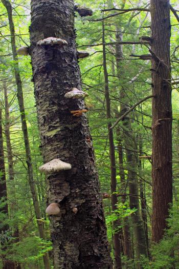 Black Forest Trail (Revisited) (19)