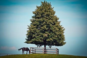 Black Horse Beside Green Leave Tree