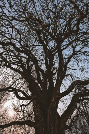 Black Leafless Tree