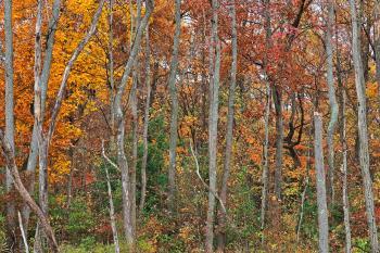 Black Marsh Fall Foliage - HDR