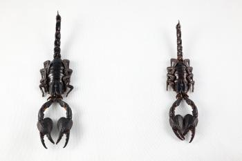 Black Scorpion Pair