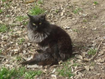 Black street cat