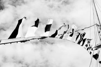 Blackandwhite flags