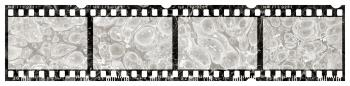 Blank Grunge Film Strip