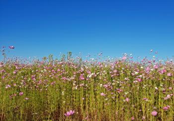Blooming flowers in the field