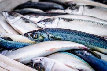 Blue and Light Grey Long Fish