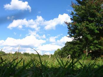 Blue skies, green grass