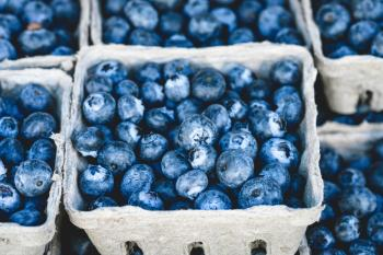Blueberry Fruit on Gray Container