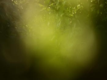 Blur nature tropical abstract background