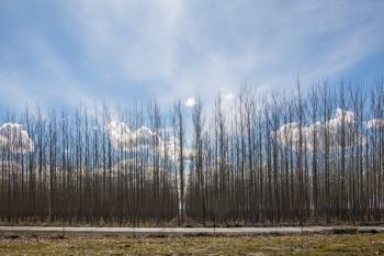Boardman Tree Farm, Eastern Oregon