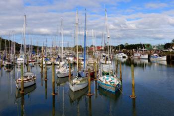 Boat Marina Whangarei. NZ