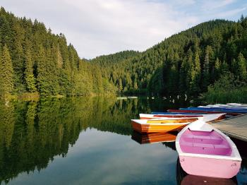 Boats On Calm Body Of Water Surrounded By Trees