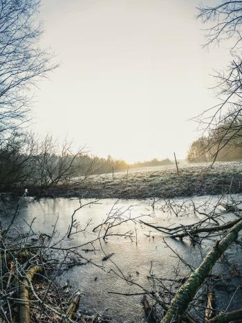 Body of Water Surrounded by Bare Trees Photo