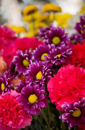 Bokeh Photo of Purple, Pink, and Yellow Flowers