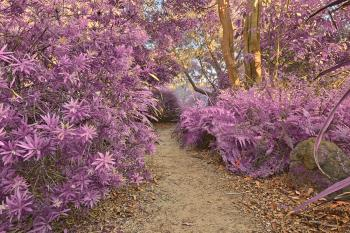 Botanical Gardens Trail - Ultra Violet H