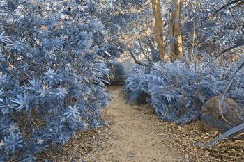 Botanical Gardens Trail - Winter Blue HD