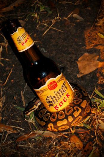 Bottle snake