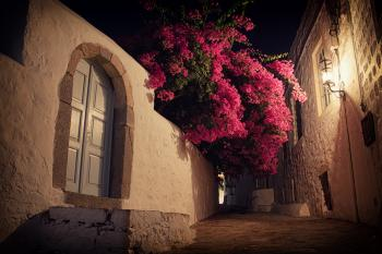 Bougainvillea at Night