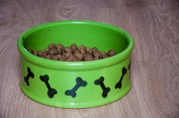 Bowl with dry food for dog or cat