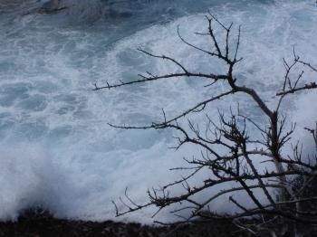 Braking waves behind a tree