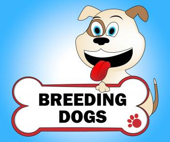 Breeding Dogs Represents Mating Doggy And Doggie