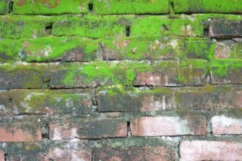 Brick and moss wall texture