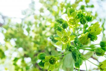 Bright green plant with flowers