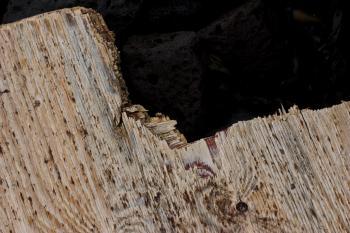 Broken wood plate