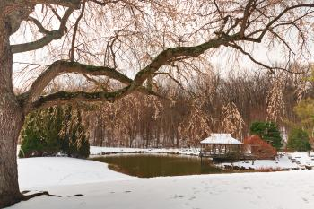 Brookside Cherry Snow Blossoms