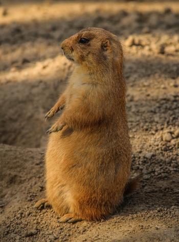 Brown 4 Legged Mammal Standing on Gray Sand during Daytime