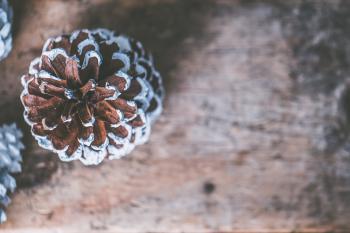 Brown and Gray Mushroom