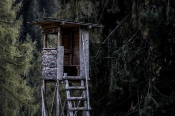 Brown and Gray Wooden Tree House Near Trees