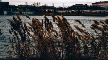 Brown Grasses Near Body of Water Across Houses