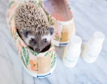 Brown Hedgehog in Brown-and-green Keds Low-top Sneakers With Bottles