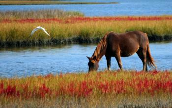 Brown Horse on Green and Red Grasses Beside River