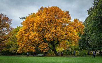 Brown Leaves Tree