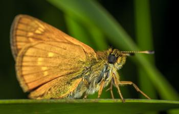 Brown Moth in Close-up Photography