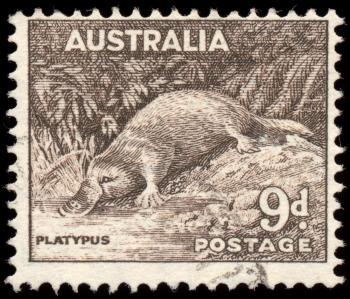 Brown Platypus Stamp
