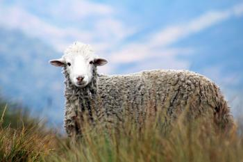 Brown Sheep on Grass in Auto Focus Photography
