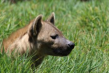 Brown Short-coated Dog on Green Grass Field