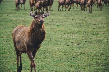 Brown Short Coated Mamml on Green Grass Fields