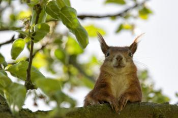 Brown Squirrel Closeup Photography