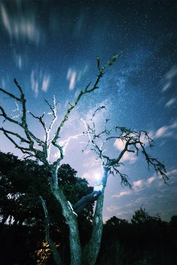 Brown Tree during Dawn