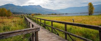 Brown Wooden Bridge Beside Green Grass Field