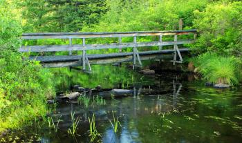 Brown Wooden Bridge in Forest Above River during Daytime