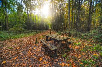 Brown Wooden Table With Bench Near Green Trees